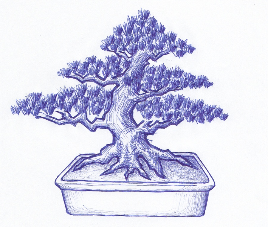 Bonsai Juniper X